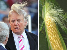 Donald Trump funny hair